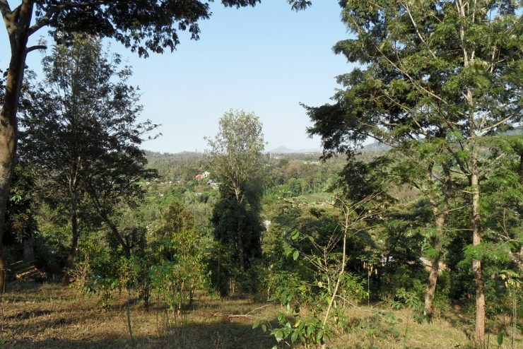 Elevated Plot Baraa