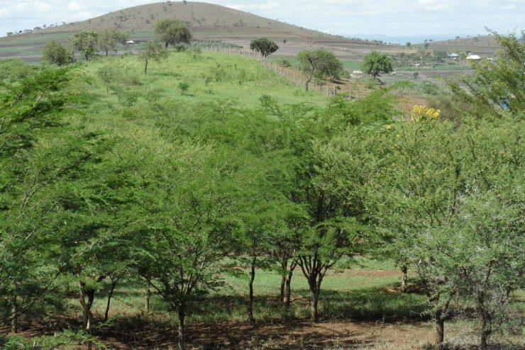 Kisongo Unique Land